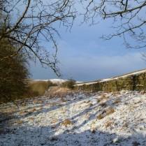 SnowyAlston016